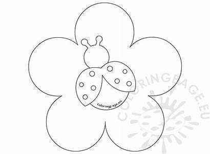 Flower Ladybug Template Coloring Cake