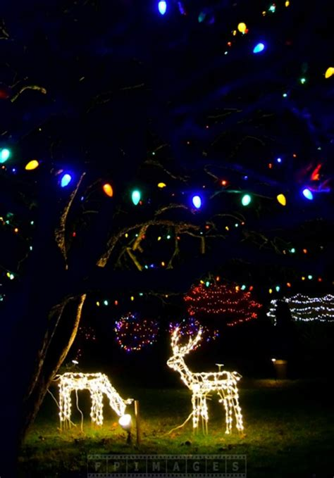 up yard decorations canada enjoy lights decorations at