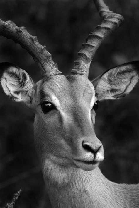 stunning examples  animal photography  black  white