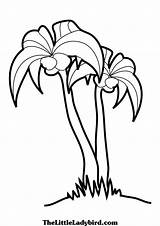 Palm Tree Colouring Coloring Pages Branches Simple Palmetto Drawing Sabal Beach Clipart Template Clipartbest Trees Getdrawings Clip Club Sketch sketch template