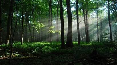 Forest Quiet Nature Landscape 1080p Pc