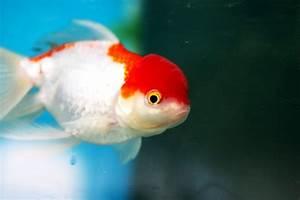 Poisson Aquarium Eau Chaude : aquarium poisson eau froide ~ Mglfilm.com Idées de Décoration