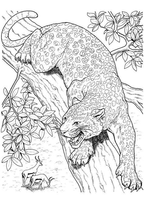 10 Best Jaguar Coloring Pages For Little Ones (With images