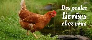 Comment Elever Des Poules : tout savoir sur les poules pondeuses id es d coration ~ Melissatoandfro.com Idées de Décoration