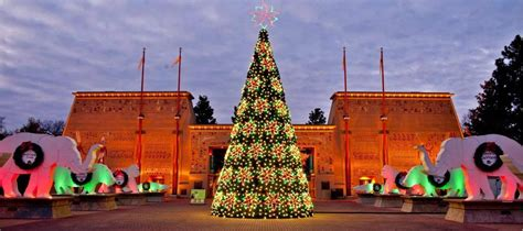 commercial christmas trees wholesale commercial trees for downtowns light shows and parks