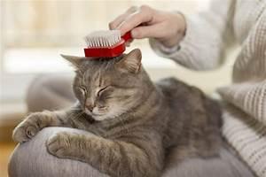 Balkonschutz Für Katzen : fellpflege bei katzen f r sch nes und gesundes fell ~ Eleganceandgraceweddings.com Haus und Dekorationen