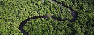 Amazon Rainfore... Amazon Jungle Quotes