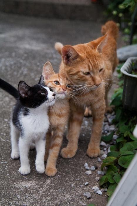 barn cat barn cats animalicos