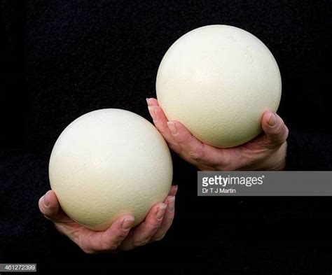 Ostrich Egg Stock Photos And Pictures