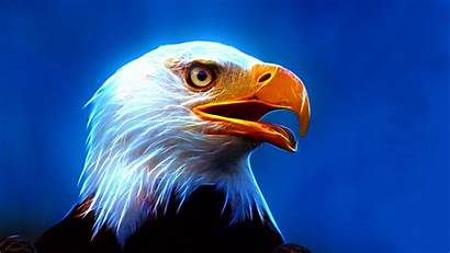 Eagle Pc Ultra Phone Mobile Wallpapers13 Resolution