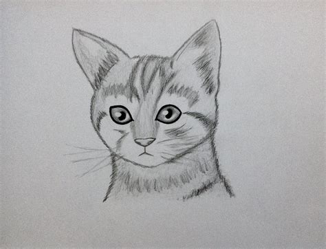 Realistic Cat By PacificProductions On DeviantArt