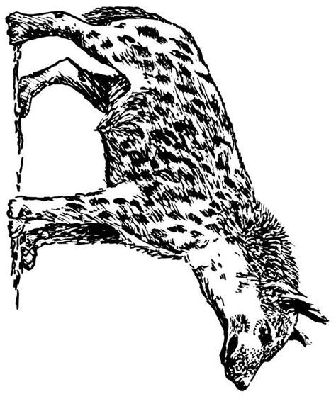 dibujo  colorear hiena img