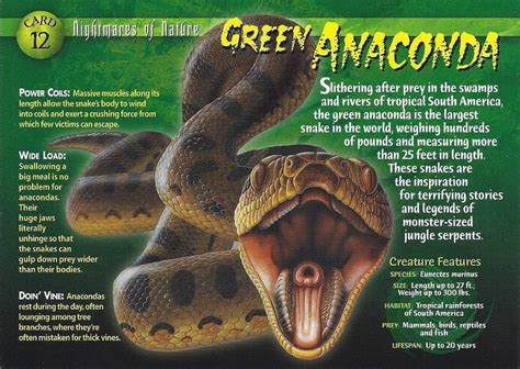 green anacondas characteristics habitat attacks