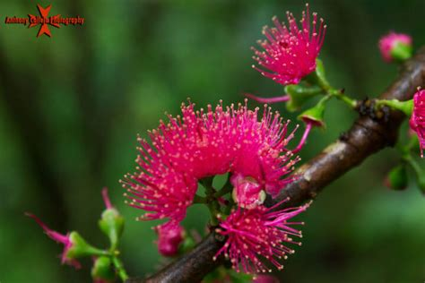 hawaiian plants flowers