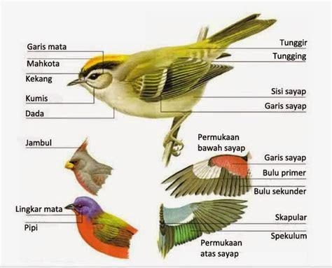 bagian bagian tubuh burung  penting  pengamatan