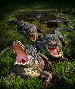 Gator Bog by Jerry LoFaro | Creatures | 2D | CGSociety