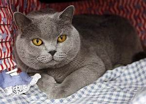 Cool Cat Breeds - Pets Cute and Docile