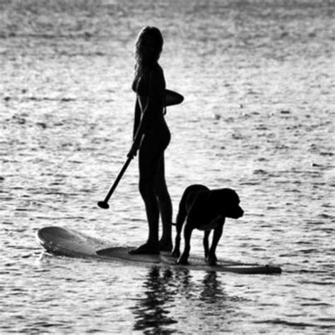 images  stand  paddle dogs  pinterest
