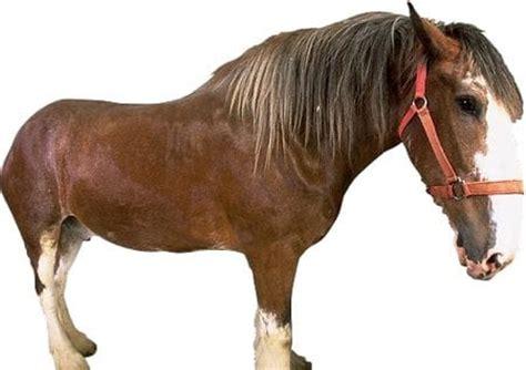 Beruhigungsmittel Pferd Vetranquil
