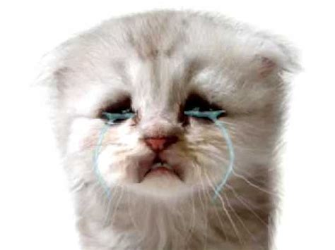 Baby Kittens Crying Images