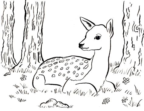 Fawn Coloring Page