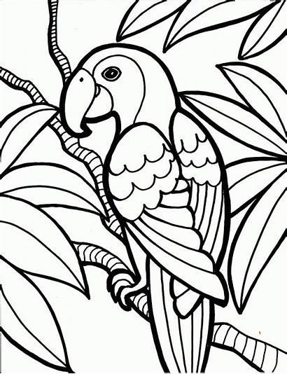 Coloring Parrot Pages Birds Printable Parrots Colouring