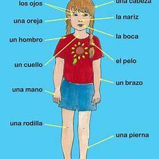 Body Parts In Spanish Memrise