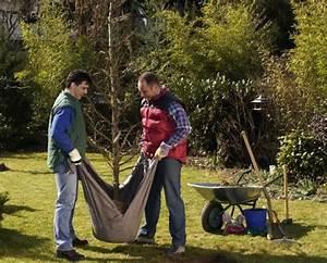 Bäume Umpflanzen Jahreszeit : gartentipps f r den ziergarten im oktober mein sch ner garten ~ Orissabook.com Haus und Dekorationen