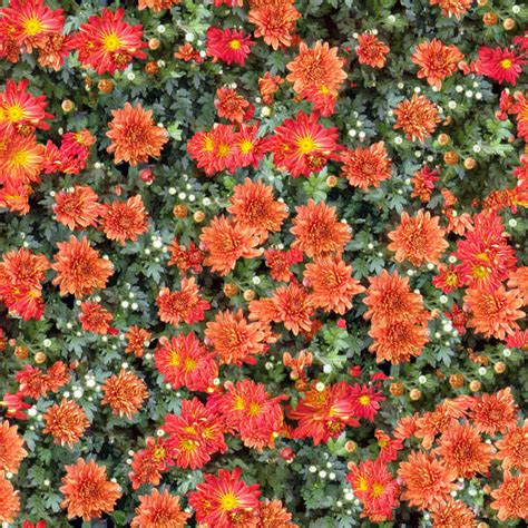flowerbeds  background texture flower flowers