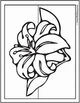 Lily Coloring Pages Spring Stargazer Flowers Lilies Drawing Sheet Pdf Printables Colorwithfuzzy Getdrawings Fun sketch template