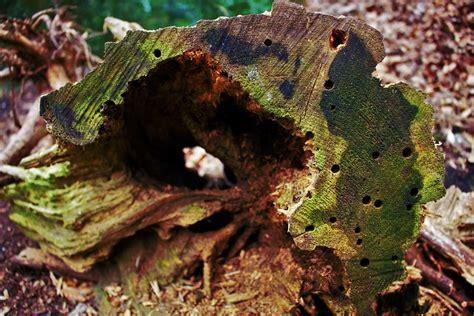 warum totholz  wichtig fuer tiere und pflanzen ist ein