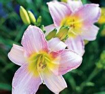 Die Schönsten Steingärten : die sch nsten rosa blumen im garten anbauen gartengestaltung ~ Bigdaddyawards.com Haus und Dekorationen