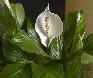 Help the Environment with Houseplants from Costa Farms