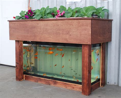 indoor aquaponics city dwelling vegetable farming while