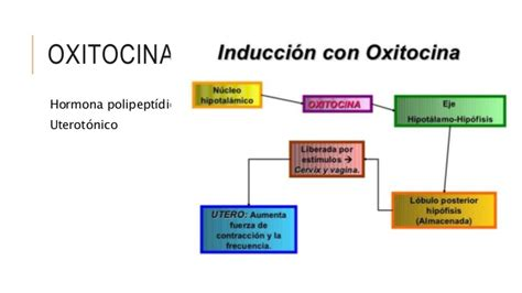 Cytotec Y Oxitocina Cytotec Oxitocina Online And Mail Order Pharmacies