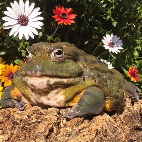 pin by aestheticallyinlove on frog time in 2020