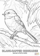 Coloring Bird State Alabama Pages Printable Popular sketch template