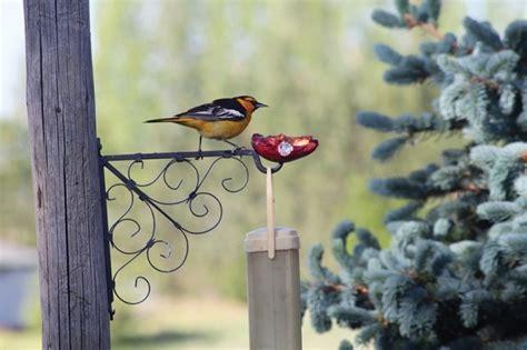 wild birds and grape jelly lifestyles elkodaily com