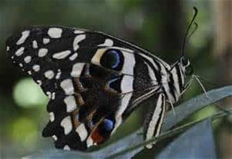 85876 Westminster Butterfly Pavilion Coupon by Cheap With In Denver And Boulder Mile High On