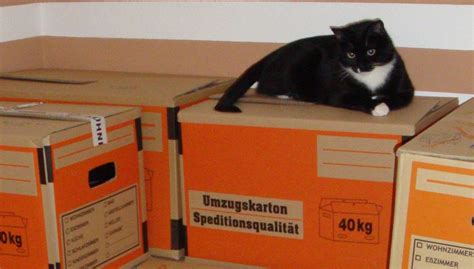 Tipps Für Umzug by Sieben Tipps F 252 R Den Umzug Mit Katzen Revvet De
