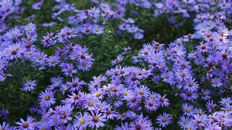 Blumen Im Garten Herbst by Herbst Garten Blumen Stockvideo 169 Milkare 145156661