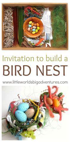 preschool birds theme images bird theme bird