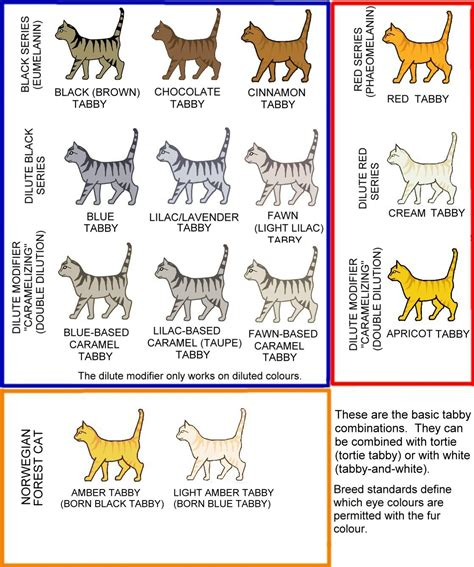 cat colors colour and pattern charts