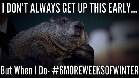 Groundhog Day Memes - pics groundhog day memes funny photos after punxsutawney phil saw shadow hollywood life