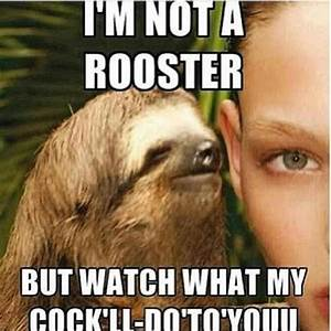 75 best images about Inappropriately hilarious Sloth on ...