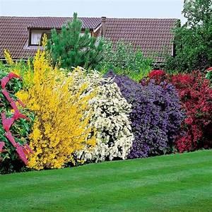 siepi sempreverdi fiorite per terrazzo cerca con google With lovely idees de jardins paysagers 3 jardin anglais idees et conseils pour lamenagement de