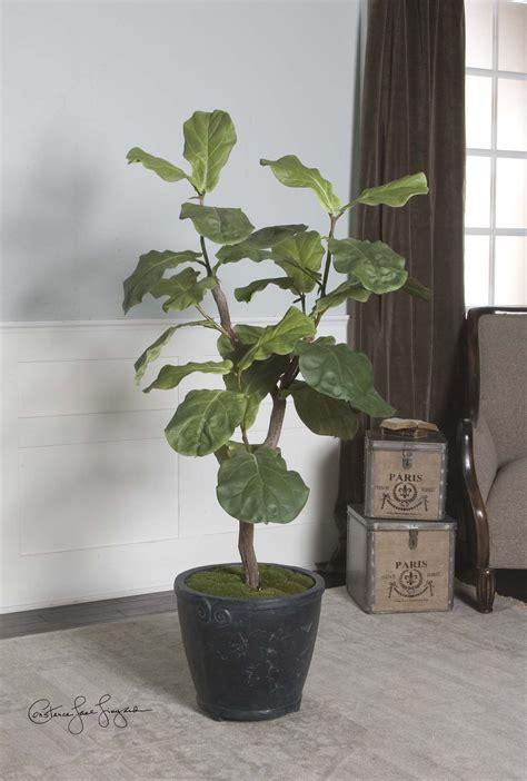 fiddle leaf fig tree fiddle leaf fig 5 tree since i got my meyer lemon 8901