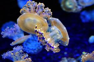 15 Remarkable Facts About Jellyfish  Jellyfish