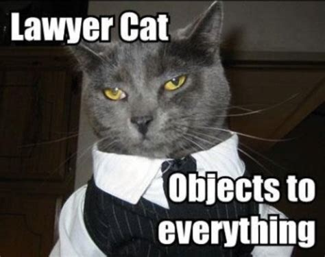 lawyer cat objects   law pinterest cats