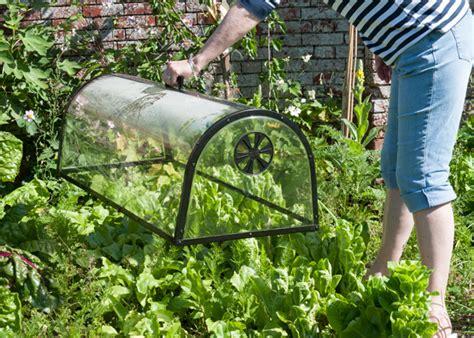Kitchen Garden Equipments by Buy Kitchen Garden Cloche